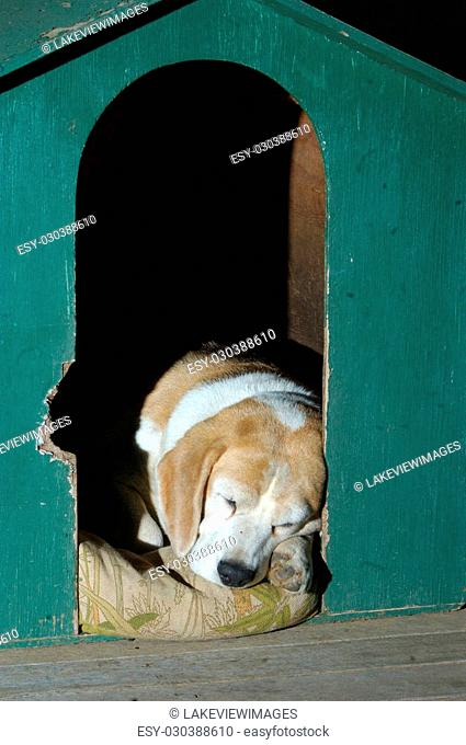farm dog taking his rest on the verandah after a hard day, Darling Downs, Queensland, Australia