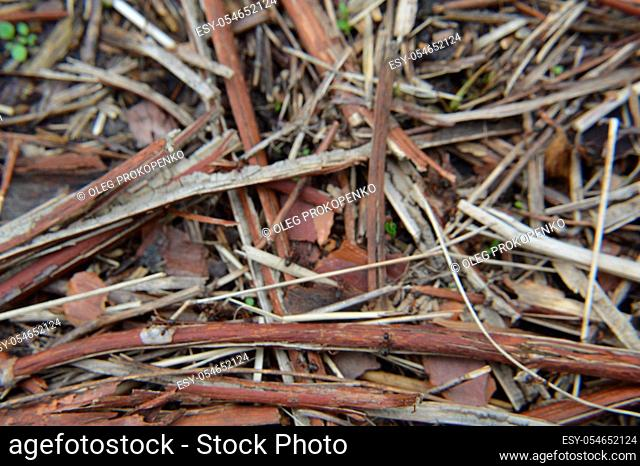 Texture of sawn tree trunks and shavings in a the forest