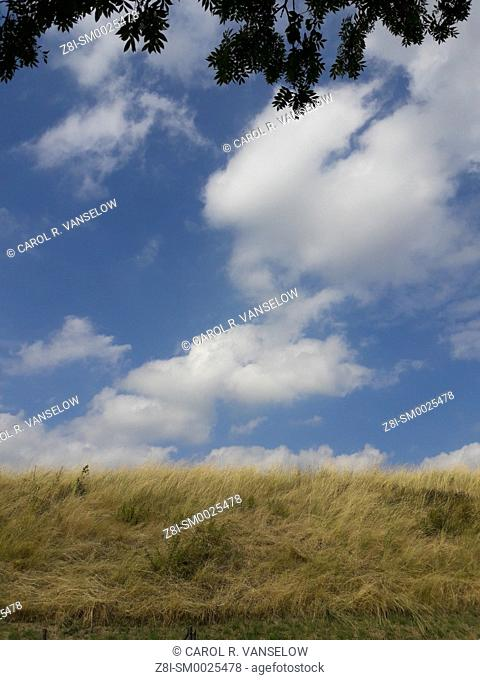 Horizon with dry grass and clouds in sky. Taken in the Limburg province of the Netherlands