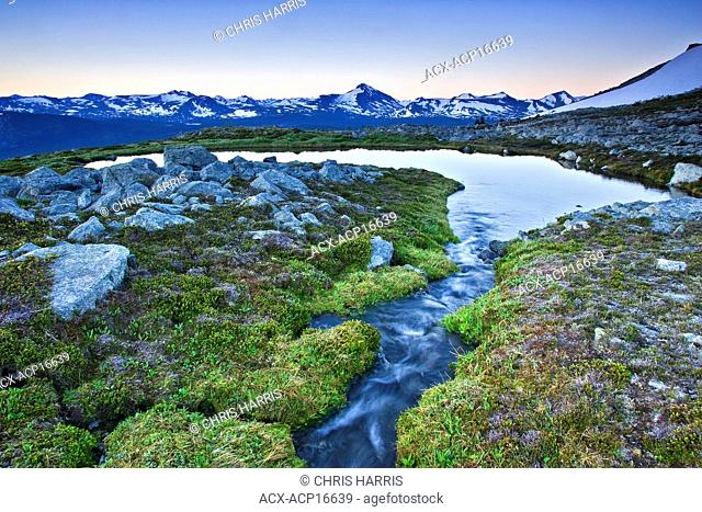 Alpine meadow and Coast Mountains in the Chilcotin region of British Columbia, Canada