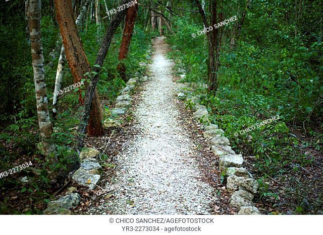 A sacbe Mayan white way in Calakmul Biosphere Reserve, Campeche state, Yucatan Peninsula, Mexico
