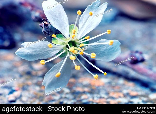 Enlarged flowers (even outwardly simple) look amazingly beautiful when magnified, stamens and petals
