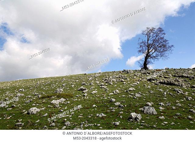 an oak tree without leaves on the top of a rocky hill. Monte Godi. parco nazionale d'abruzzo. abruzzo. italy. europe