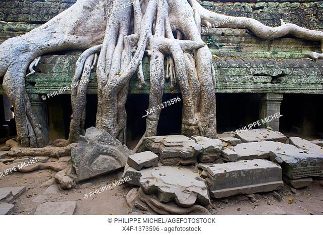Southeast Asia, Cambodia, Siem Reap Province, Angkor site, Unesco world heritage since 1992, Ta Prohm temple builded in 1186 by the king Jayavarman VII