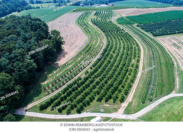 Aerial view of neat rows of peach trees at orchard, Shawsville, Maryland