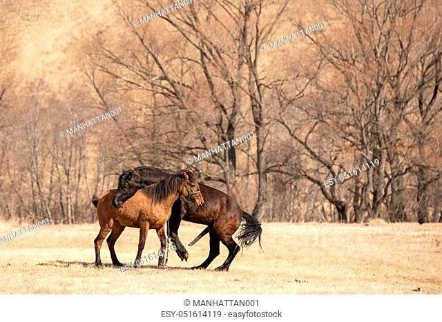 Two Horse Mating In The Field Stock Photo Picture And Low Budget Royalty Free Image Pic Esy 051614119 Agefotostock Results for horse mating with horse. two horse mating in the field stock