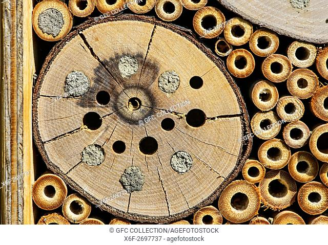 Breeding cavities of an artificial nesting block (bee hotel) partially sealed by mason bees with a layer of mud