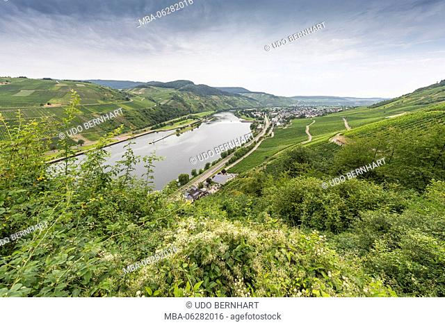 Europe, Germany, Rhineland-Palatinate, district Bernkastel Wittlich, Mittelmosel, the Moselle, Wintrich, view of the Geyerskopf
