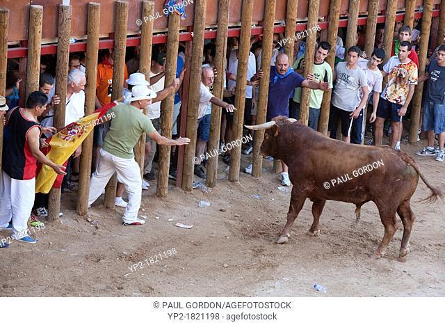 Capea non-lethal, amateur bullfight during Fiesta of Nuestra Señora and San Roque in the Plaza del Coso - Peñafiel, Valladolid Province, Castile and León, Spain