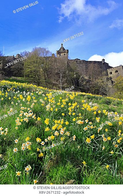 Edinburgh Castle above daffodils in Castle Gardens, Edinburgh, Scotland, UK
