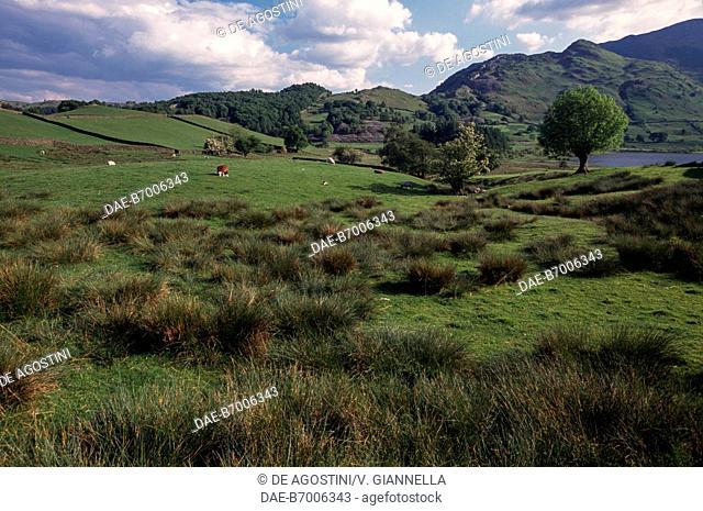 Landscape surrounding Grasmere Lake, Lake District (UNESCO World Heritage Site, 2017), United Kingdom