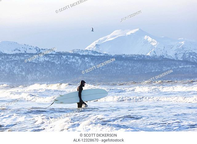 Surfer with surfboard entering Kachemak Bay, South-central Alaska; Homer, Alaska, United States of America