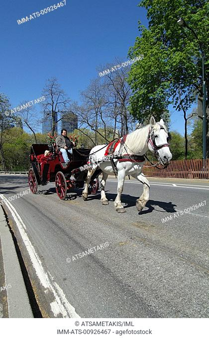 Central Park, walk with horse drawn carriage, New York City, New York, United States, North America