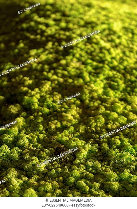 Spectacular Artificial Model Green Treetops Full- Frame Forest Canopy