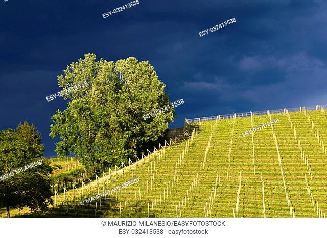 View of vineyards and Langa hills during a thunderstorm, suggestive contrast between dark skies and vineyards illuminated by the afternoon sun