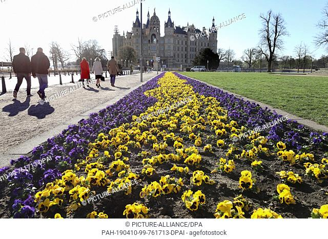 10 April 2019, Mecklenburg-Western Pomerania, Schwerin: Pansies bloom in the Old Garden in front of Schwerin Castle. Photo: Bernd Wüstneck/dpa-Zentralbild/ZB