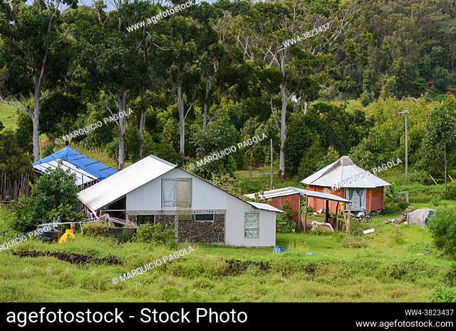 Some houses near some trees at the outskirts of Hanga Roa, Easter Island