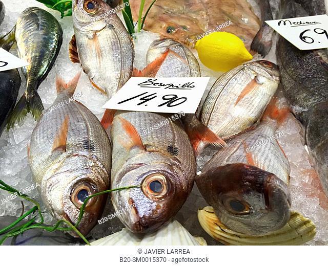 Sea bream, Fishmarket, Donostia, San Sebastian, Gipuzkoa, Basque country, Spain