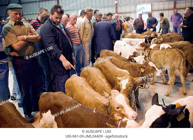 Cattle in salesyard with buyers and farmers, Saint-Flour, Cantal, Auvergne (Massif Central), France. (Photo by: Auscape/UIG)