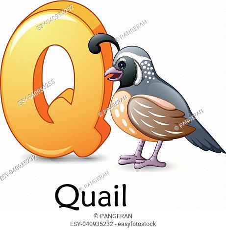 Vector illustration of Letter Q is for Quail bird cartoon alphabet