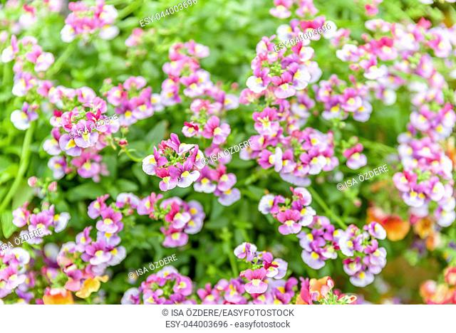 Top view of colorful different potted plants and seedlings blooming in natural garden for sale