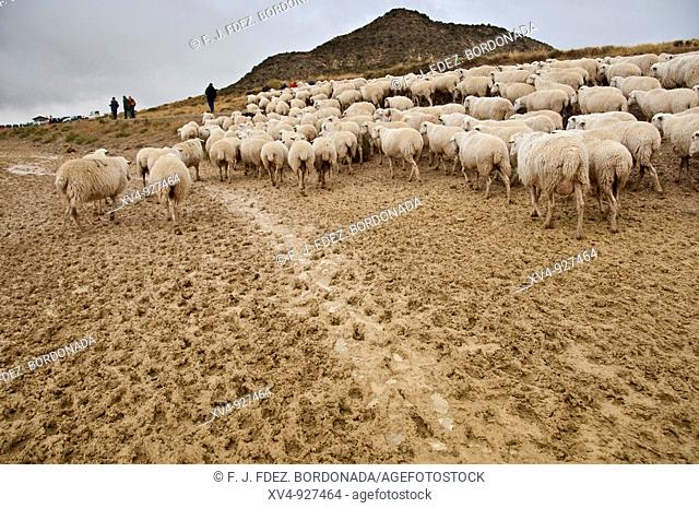 Input Bardenas won the shepherds walk by Roncal Valley All 18 September celebrates this ancient tradition