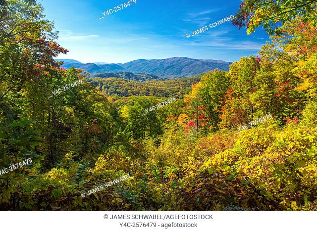 Fall color on the Roaring Fork Motor Nature Trail in Great Smoky Mountains National Park in Tennessee