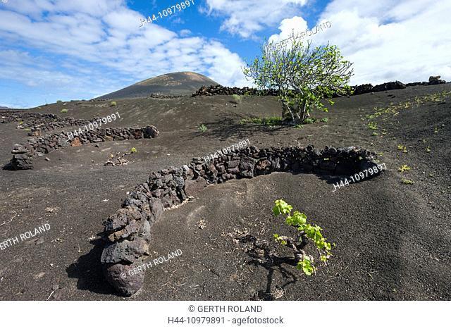 La Geria, Spain, Europe, Canary islands, Lanzarote, volcano earth, volcano ground, volcanical, wine-growing, stone walls, shoots