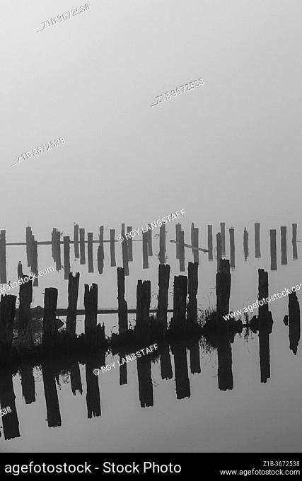 Black and white image of old wooden pilings on a dense foggy morning in Steveston British Columbia Canada