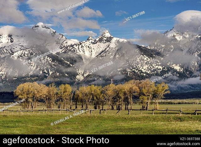 Group of Cottonwoods on Mormon Row Late Spring Grand Teton National Park WY USA World Location