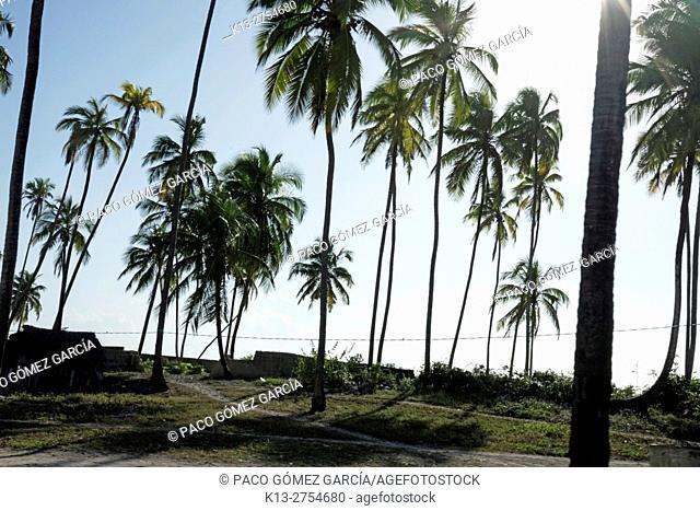 Tanzania, Zanzibar, Matemwe Beach