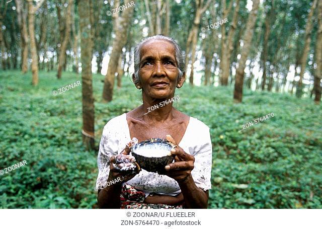 Eine Gummi Pflueckerin Gummibaum Plantagen von Hikkaduwa im suedwesten von Sri Lanka in Asien