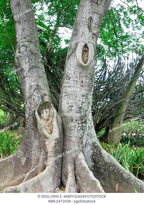 Tree trunks and roots
