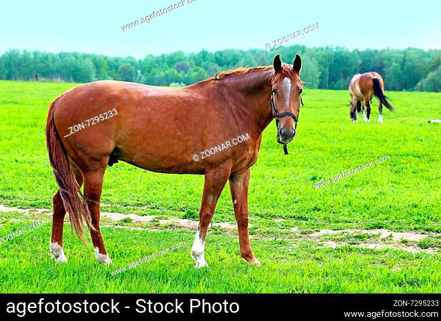 Beautiful horses on the background of the forest landscape photographed close up