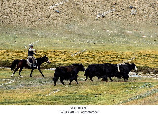 cattleman herding cows, Kyrgyzstan, Narin , Tash Rabat