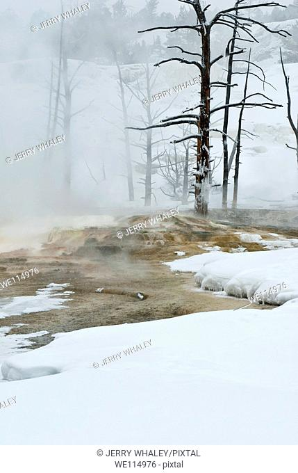 Winter, Mammoth Hot Springs, Yellowstone NP, WY
