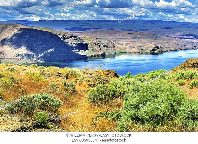 Yellow Flowers Field Wanapum Lake Colombia River Wild Horses Monument High Desert Vantage Washington