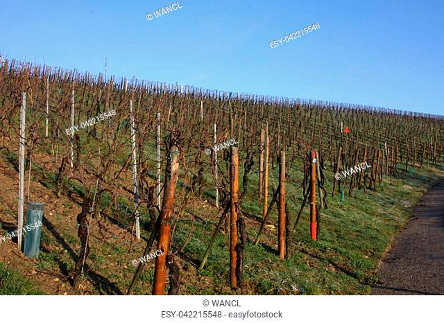 View of a vineyard in Luxembourg in mid-winter sun