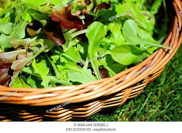 Fresh Summer Salad