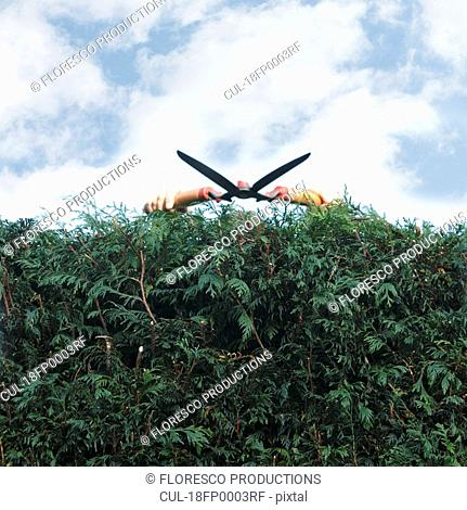 Man pruning hedges
