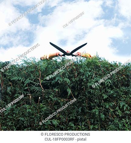 Man pruning hedges