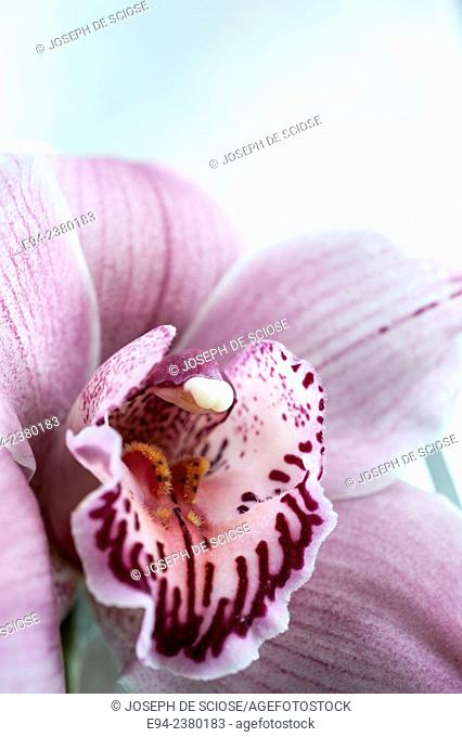 Close up of an orchid flower