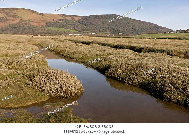 View of saltmarsh habitat developing as shingle ridge has been breached, managed retreat from rising sea levels, Porlock Bay, Exmoor N P , Somerset, England
