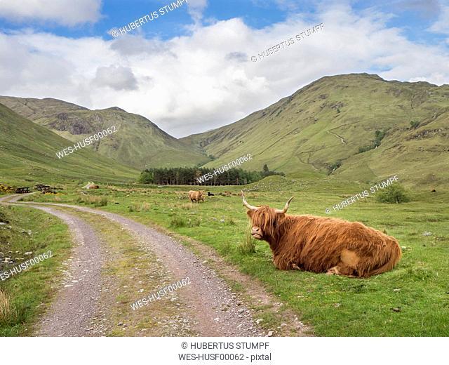 Highland cattle sitting on grassy land against cloudy sky, Scotland, UK