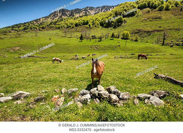 Europe, France, Pyrenees, 2019-06, Horses grazing in a valley in the mountains of French Pyrenees, close to the Plateau of Cambasque and the old cable car ski...