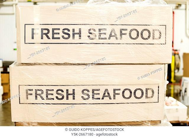 New York City, USA. Freshly frozen fish on display in iced boxes at the New Fulton Fish Market, Hunts Point, The Bronx