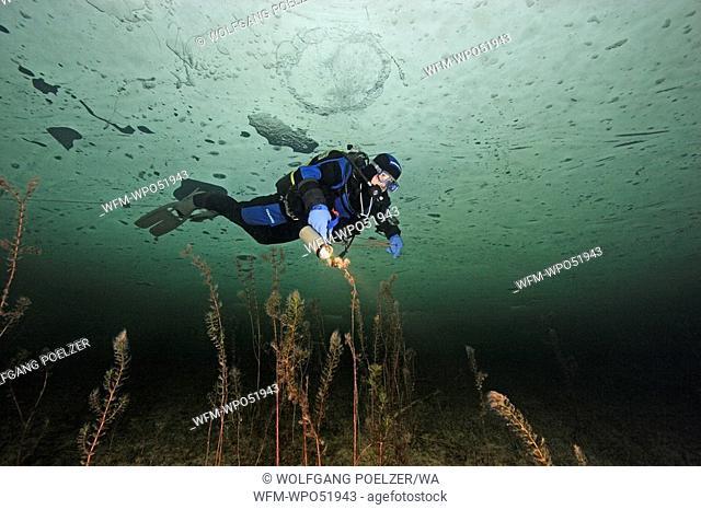 Ice-Diver at Lake Grundlsee, Styria, Austria