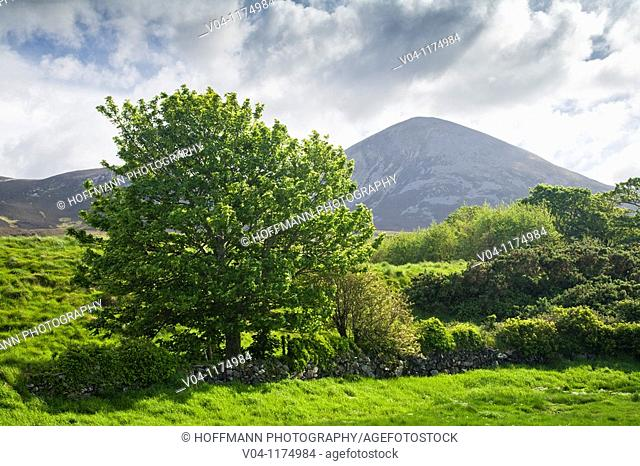 Landscape with Croagh Patrick in the background in County Mayo, Ireland, Europe