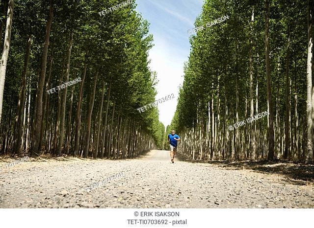 USA, Oregon, Boardman, Man running between rows of poplar trees in tree farm