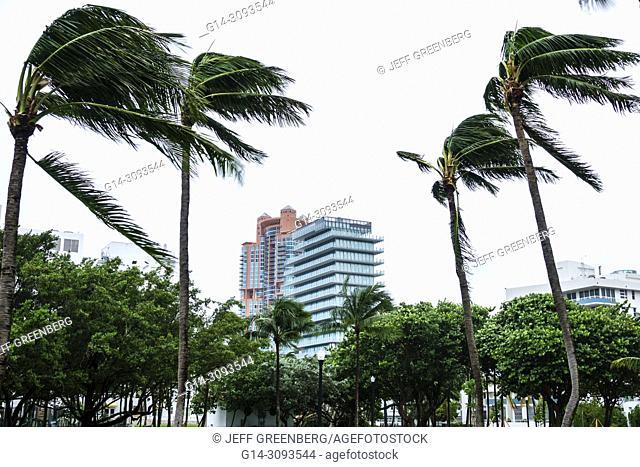 Florida, Miami Beach, Marjory Stoneman Douglas Park, Hurricane Irma, tropical storm force winds, palm trees bending, fronds blowing, gray grey sky, city skyline